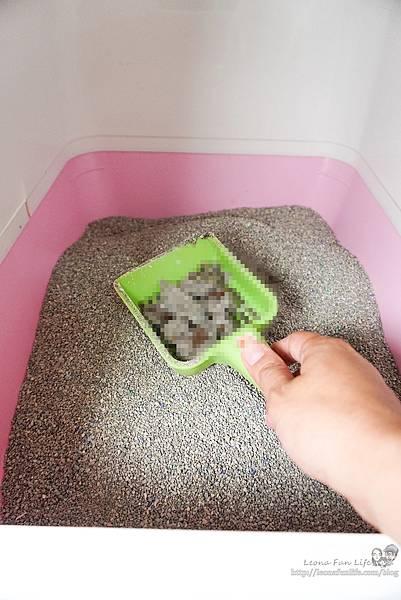 Ever Clean 藍鑽超凝結貓砂強效清香低敏使用心得-貓砂界 LV低粉塵、凝結快、活性碳除臭貓砂推薦DSC06556-2.jpg