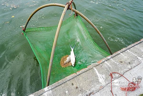 好蝦冏男社-打造自然生態,健康無毒養殖,了解好蝦抓蝦吃蝦生態體驗的好去處雲林口湖親子景點DSC06934-2.jpg