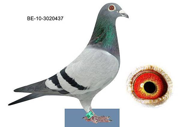 B-10-3020437