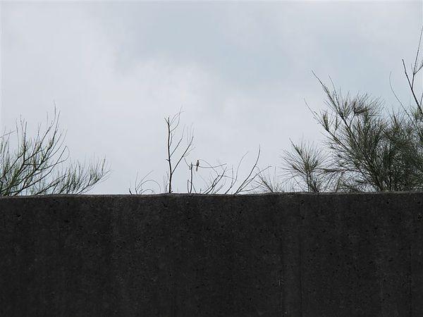 20100620 北海岸之旅 神秘的賞鳥點