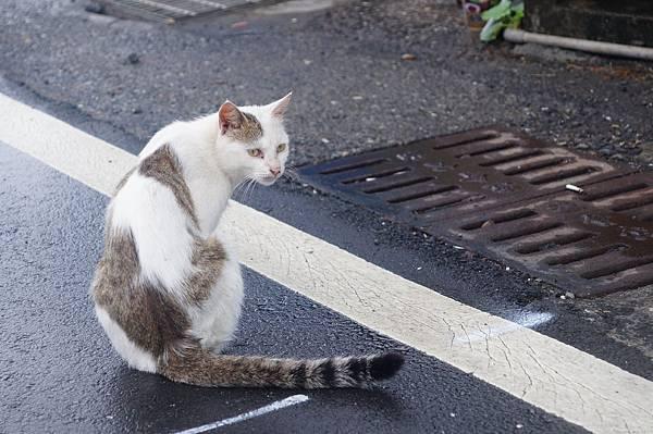 貓02.JPG