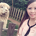 2017.05.20-025羊駝.png