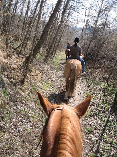 CK騎馬1.JPG