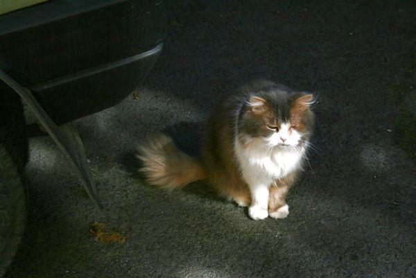KV的貓.JPG