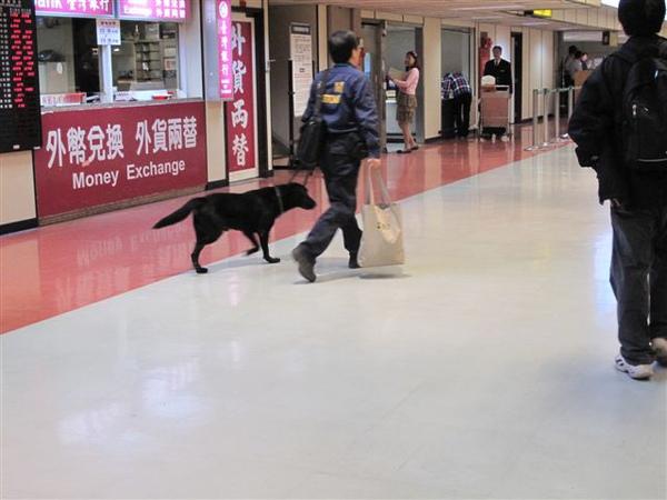 桃園中正機場的緝毒犬下班了!!!