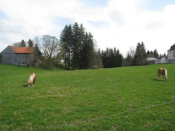 用完午餐,到了下一個景點,有小馬耶!