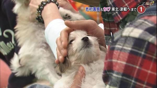 【ZOO】[HD] 20150124 天才!志村どうぶつ園.mkv_000716003.jpg