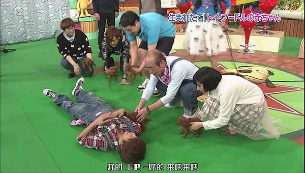 【ZOO】[普清] 20150117 天才!志村どうぶつ園.mp4_000660529