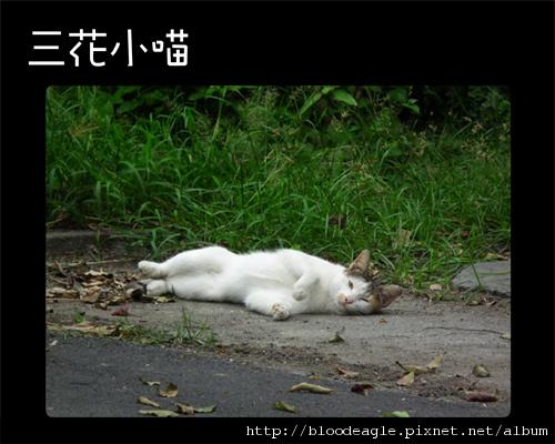 屏東野喵-2.jpg