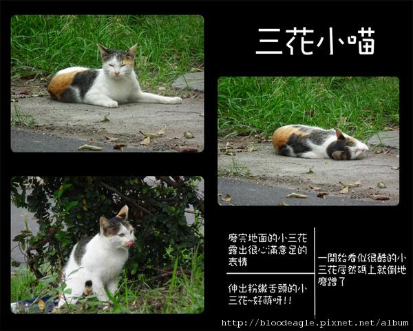 屏東野喵-1.jpg