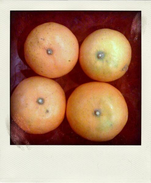就是這個橘