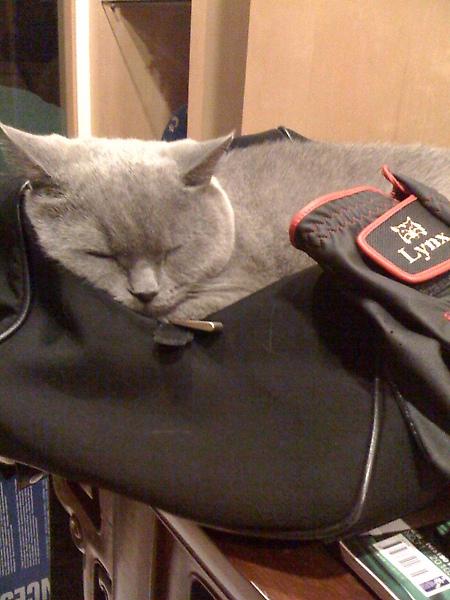 沒睡過的袋子