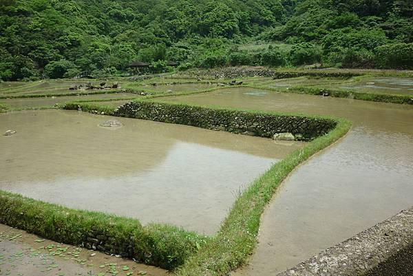 田寮洋濕地