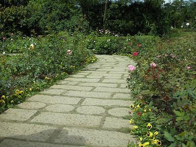 玫瑰花園1.JPG