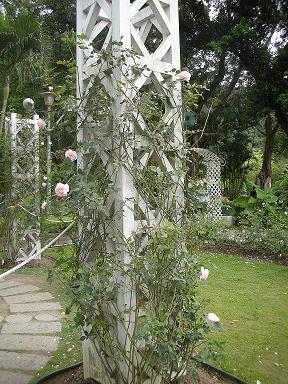 玫瑰花園2.JPG