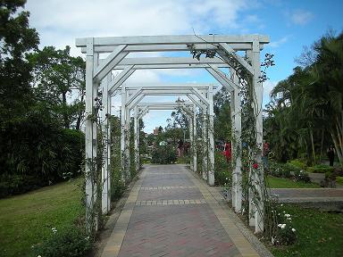 玫瑰花園3.JPG