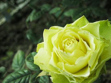綠色行星 Green plant4拷貝.JPG