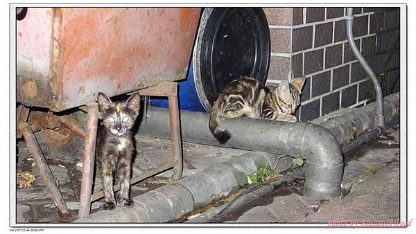 資源回收場的貓