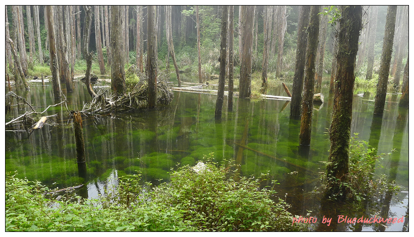 這邊看得見底下的綠藻.jpg