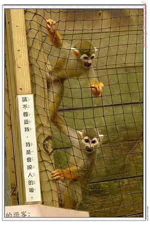 跳來跳去很凶猛的猴子