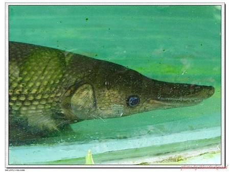 看起來很開心的魚