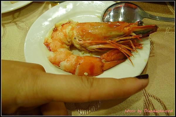 比食指還大的蝦