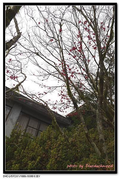 只剩幾葉紅楓還在枝頭