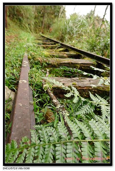 長滿雜草的鐵軌棧道