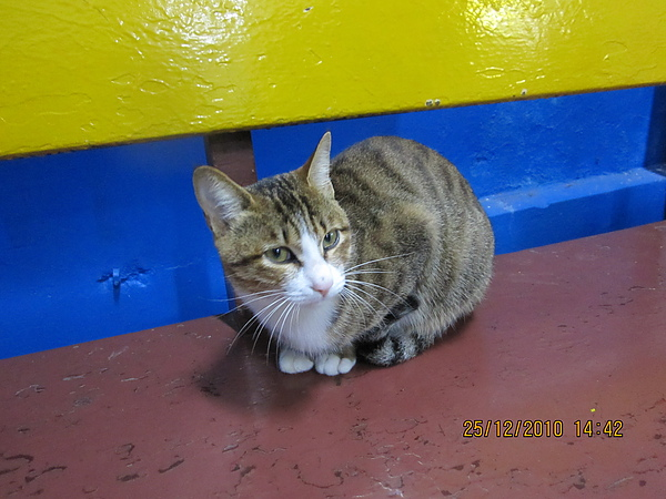 超貼心的貓咪二十四號.JPG