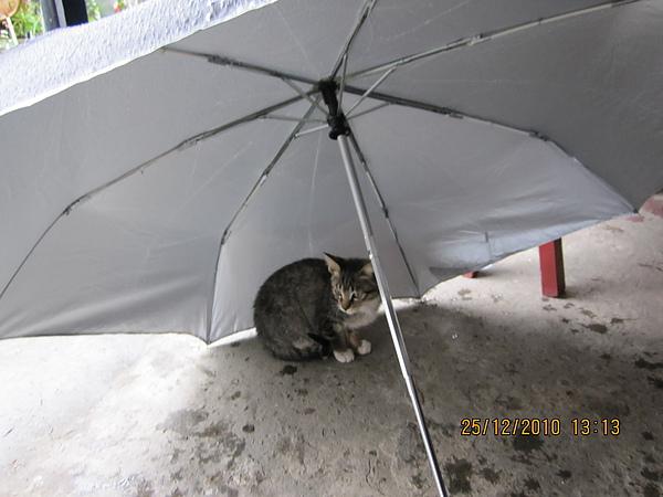 躲在傘下.JPG