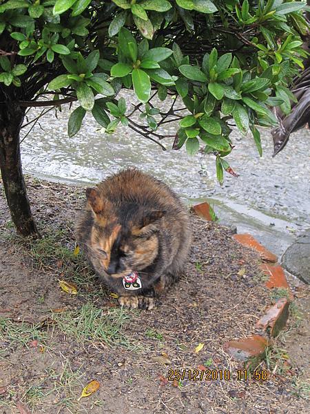 孤僻貓咪八號.JPG