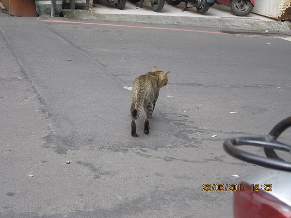 撒完尿就走的小浪貓