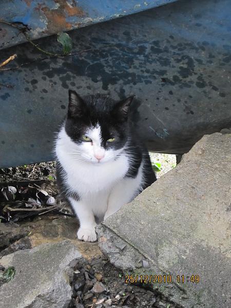 貓咪三號.JPG