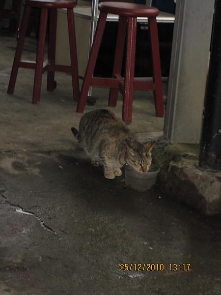 很兄的貓咪二十一號.JPG