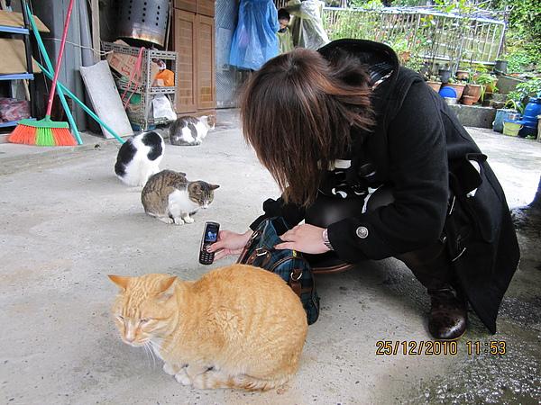 貓咪四五六七號.JPG