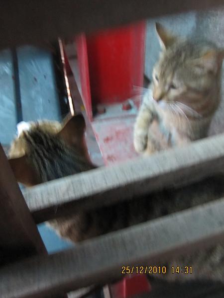 火車站裡的貓咪二十三、二十四號.JPG