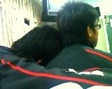你的肩膀借我睡一下.jpg