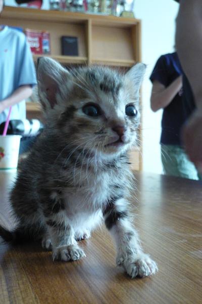 物圖小貓1