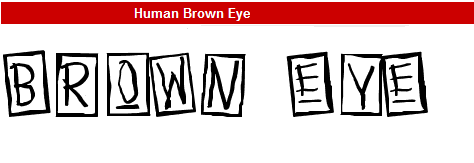 字型:Human Brown Eye