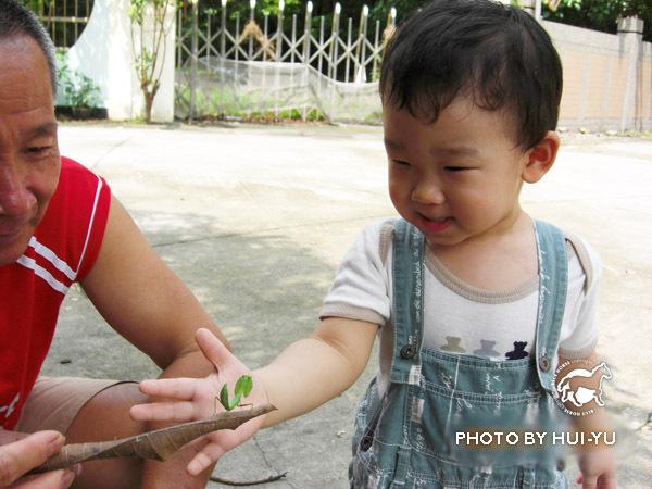 螳螂初體驗-怕怕