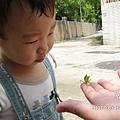 螳螂初體驗-新奇