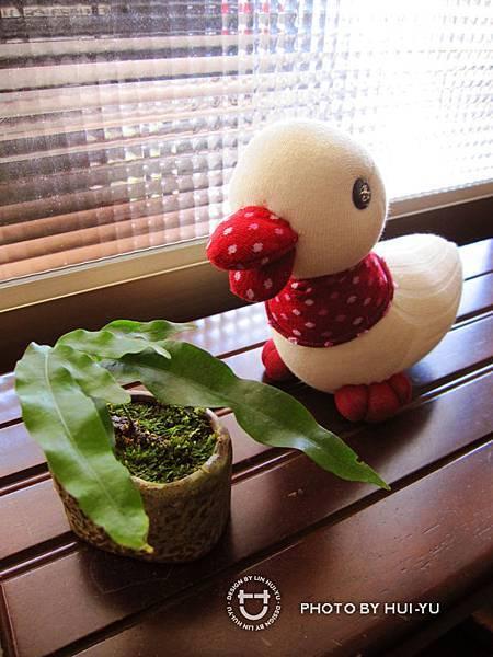 手作-襪子娃娃No34「小野鴨」2.jpg