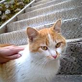 其實這貓挺可愛的