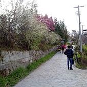 準備去神木步道
