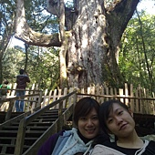 母女與媽媽樹
