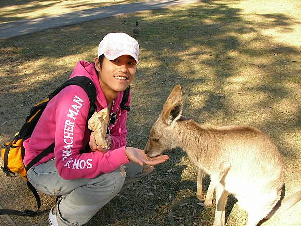 在澳洲餵袋鼠