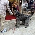 異人館街驚見一巨犬