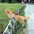 超妙瑜珈貓