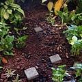 潮汐灌溉 & 陶瓷土