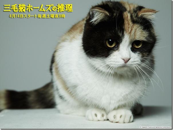 三毛貓推理3